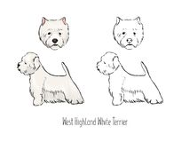 Set of colorful and monochrome outline drawings of face and full body of West Highland White Terrier or Westie, front. And side views. Small hunting dog with Royalty Free Stock Photo