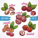 Set with colorful nuts Stock Images