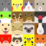 Set of cute pet animals face in square. Set of colorful pet animals face in square eyes, nose and mouth royalty free illustration