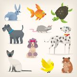 Set of pets 2. Set of colorful pets. Different species and kinds of breeds of dogs and cats. Isolated vector illustrations Royalty Free Stock Photo