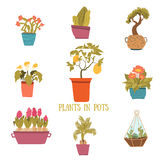 A set of colorful pots of flowers in cartoon style. Cactuses, lemon tree, calla lily, bamboo in pots. Vector Stock Photography