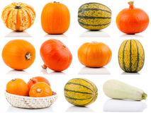 Set of colorful pumpkins Royalty Free Stock Photography