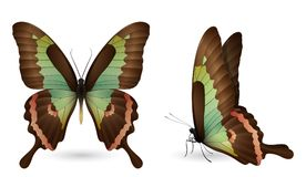 Set of colorful butterflies. Front and side view. Set of colorful realistic butterflies. Front and side view. Vector 3D illustration Stock Photography
