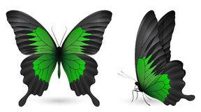 Set of colorful butterflies. Front and side view. Set of colorful realistic butterflies. Front and side view. Vector 3D illustration Royalty Free Stock Photography