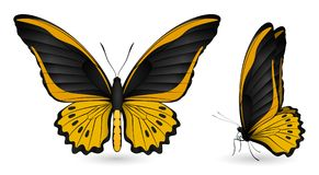 Set of colorful butterflies. Front and side view. Set of colorful realistic butterflies. Front and side view. Vector 3D illustration Royalty Free Stock Photo