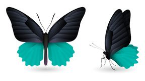 Set of colorful butterflies. Front and side view. Set of colorful realistic butterflies. Front and side view. Vector 3D illustration royalty free illustration