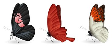 Set of colorful realistic butterflies. Vector 3D illustration stock illustration