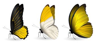 Set of colorful realistic butterflies. Vector 3D illustration royalty free illustration