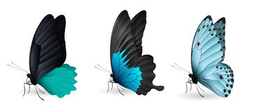 Set of colorful realistic butterflies. Vector 3D illustration Royalty Free Stock Photo