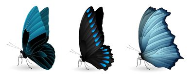 Set of colorful realistic butterflies. Vector 3D illustration Royalty Free Stock Images