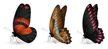 Set of colorful realistic butterflies. Vector 3D illustration Stock Image