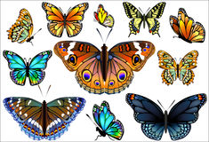 Set of colorful realistic isolated butterflies. Royalty Free Stock Photography