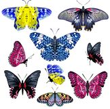 Set of Colorful Realistic Isolated Butterflies. Stock Image
