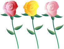 Set of Colorful Roses Royalty Free Stock Photos