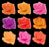 Set of colorful roses Royalty Free Stock Image