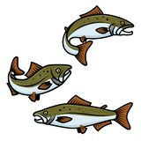 Set of colorful salmon fish sign on white background. Trout fishing. Design element for logo, label, emblem, sign. royalty free illustration
