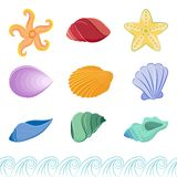 Set of colorful seashells and starfishes. Vector collection of colorful saeashells and starfish on white background with wave border Stock Photography