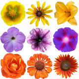 Set of colorful seasonal blooms Stock Photos