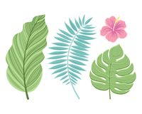 Set of tropical leaves. Isolated on white background. Vector illustration. Royalty Free Stock Images