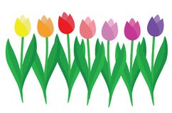 Set of colorful Tulips. Isolated on white Stock Photo