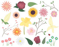 Set of colorful vector flowers. Floral elements including flowers, leaves, blossom and a ladybird. Royalty Free Stock Images