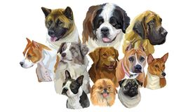 Set of big and small dog breeds royalty free illustration