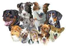 Different dog breeds Stock Photo