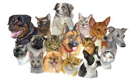 Set of dogs and cats breeds. Set of colorful vector portraits of dogs Rottweiler, Australian shepherd, Pug, Greyhound, german shepherd and cats Thai, Burmese stock illustration