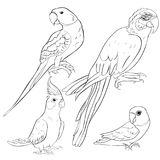 Set coloring  Indian parrot ozherelovy, Masked Lovebird, corella Royalty Free Stock Images