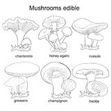 Set coloring  mushrooms russula, chanterelle, champignon, grease. Set coloring mushrooms russula, chanterelle, champignon, greasers, honey agaric, freckle Royalty Free Stock Image