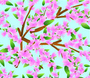Set of colourful flower ornaments Stock Images