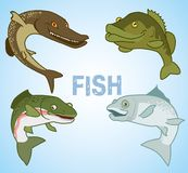 Set of commercial fish on a blue background. Vector illustration Royalty Free Stock Image
