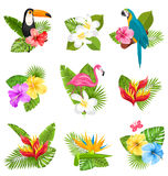 Set Composition with Tropical Flowers, Exotic Bird and Plants Royalty Free Stock Images
