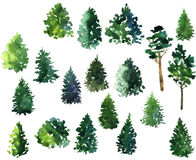 Set of conifer trees. Drawing by watercolor, artistic painting  illustration,hand drawn forest Stock Photo