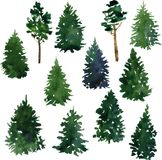 Set of conifer trees Stock Images