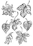 Set of contour leaves. Set of painted art, contour, autumn leaves on a white background. Tattoo style. Hand drawn. Sketch drawing stock illustration