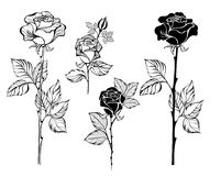 Set of contour roses Stock Image