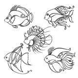 Set of Contour Sea Fishes. Royalty Free Stock Image
