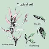 Set of contour vector flowers. Hand drawn branches and leaves of tropical plants. Monochrome floral pattern. Heliconia psittacorum vector illustration