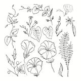 Set of contours of curly flowers and botanical plants. Isolated image on white background. Handmade illustration. Leaves and twigs. Buds and blades of grass