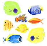 Set of coral fish clipart. Set collection of hand painted drawn watercolor cliparts of  fish of coral reefs Royalty Free Stock Image