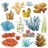 Set of corals and algaes. Stock Photos