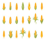 Set of corn with green leaves. Royalty Free Stock Photography