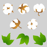 Set of cotton plant elements Stock Photos