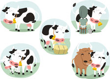 Set cow Stock Photography