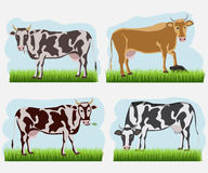 Set of cow, flat icons. Vector cows of different colors Stock Images