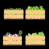 Set of crates with veggies Stock Photos