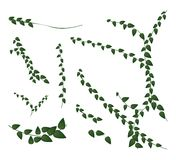 A Set of Creeper Plant on White Background Stock Photos