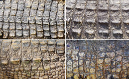 Set of crocodile skin Royalty Free Stock Image