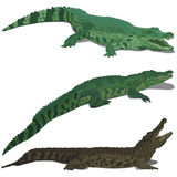 Set of crocodiles Stock Image